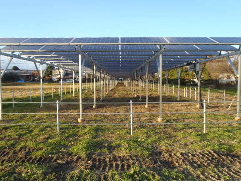 solar panels on farmland